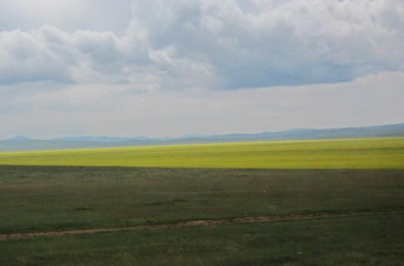 Flora Mongolië bloemen flowers