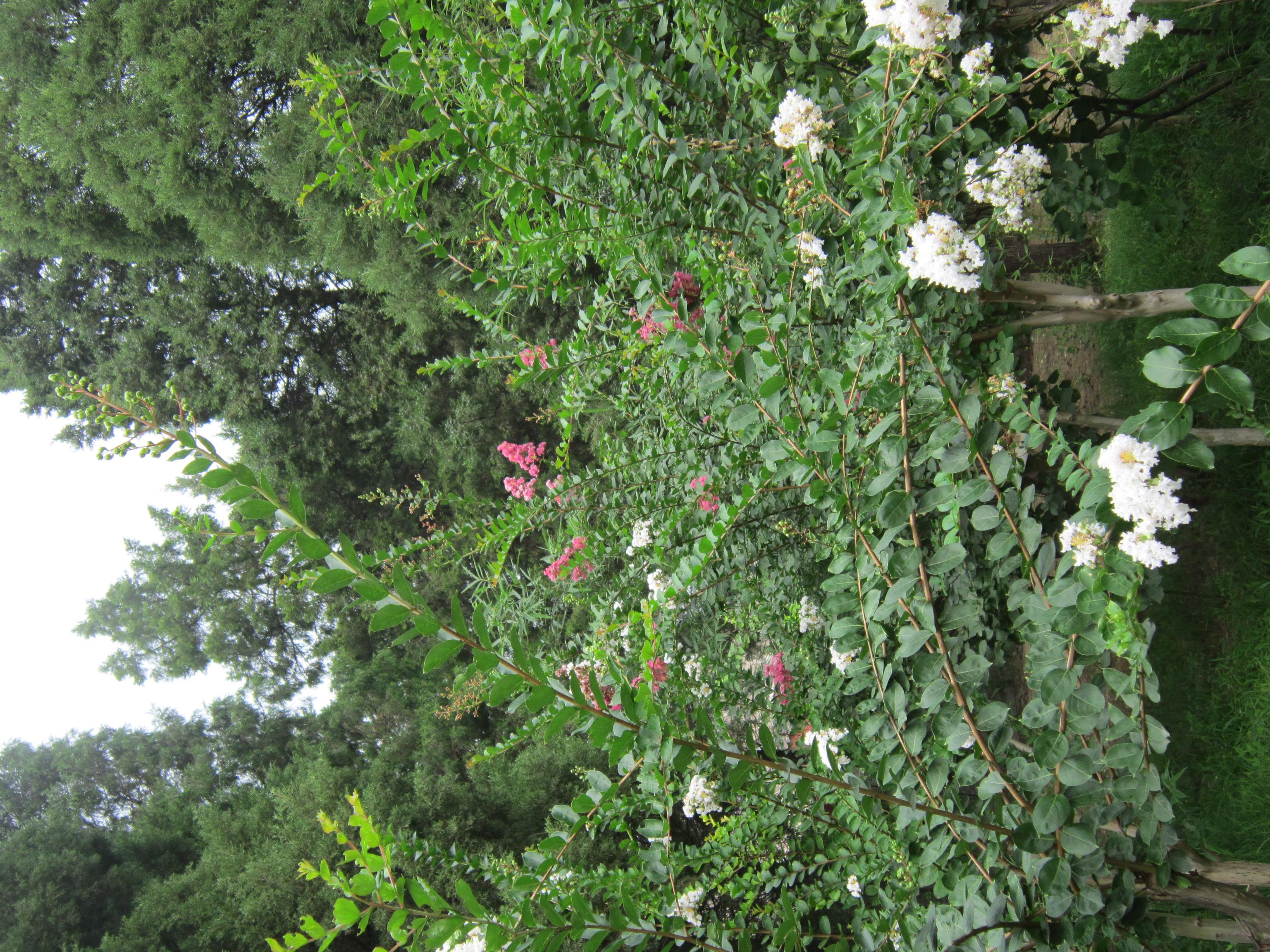Beijing China rondreis groen park gezond Jingshan Park