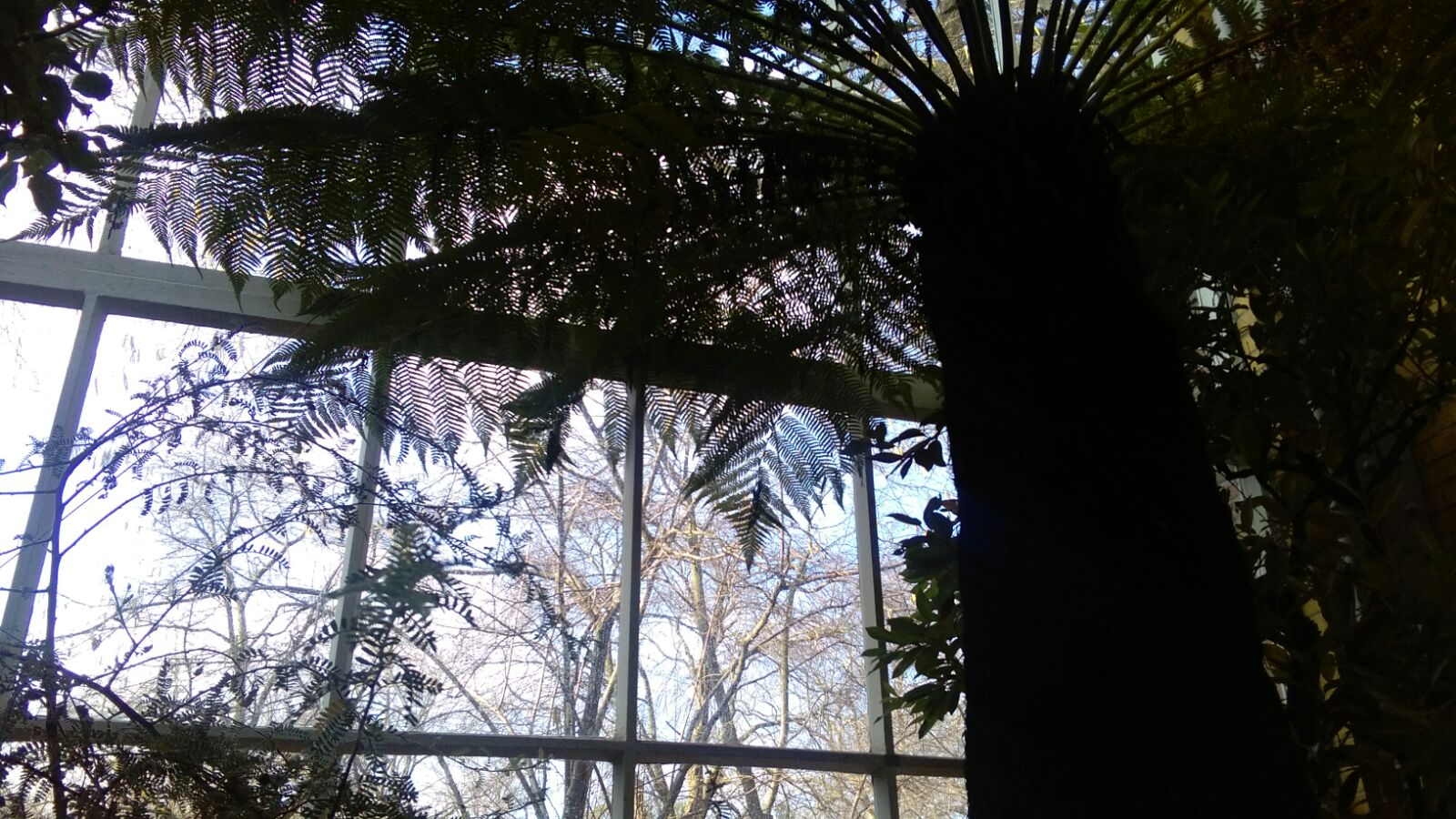 Amsterdam botanische tuin winter Hortus Hortus Botanicus Citytrip stedentrip dagtrip trein